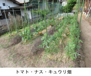 トマトナスキュウリ畑 修正済