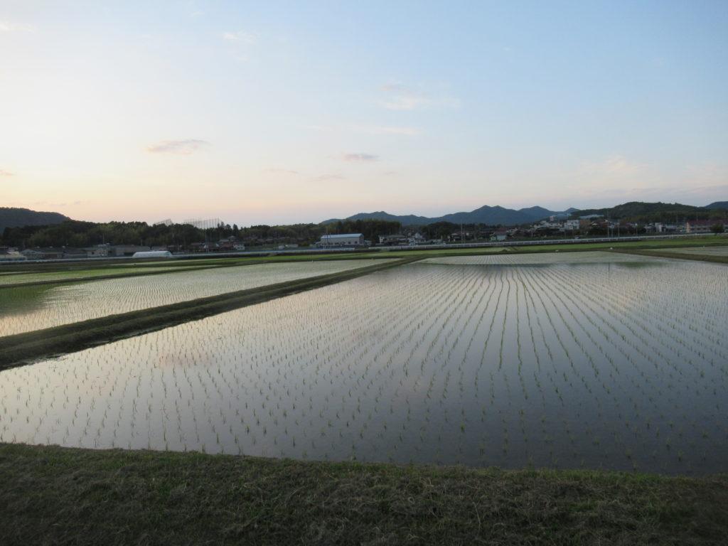 田植完了の田園風景